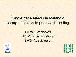 Single gene effects in Icelandic sheep – relation to practical breeding