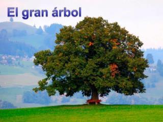En el centro de un gran bosque había un gran árbol,  un magnífico árbol para los que lo veían.