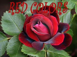 RED COLORS