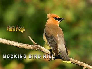 MOCKING BIRD HILL