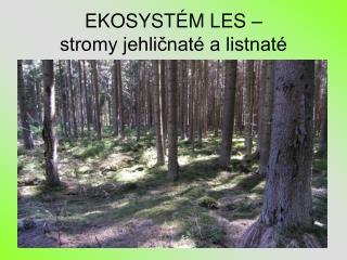 EKOSYSTÉM LES –                               stromy jehličnaté a listnaté