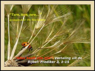 """""""Alles heeft zijn tijd"""":  Vertaling uit de Bijbel:  Prediker 3, 1-15"""