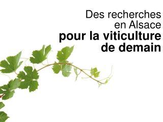Des recherches  en Alsace  pour la viticulture  de demain