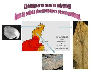 La faune et la flore du Dévonien dans la pointe des Ardennes et ses environs.