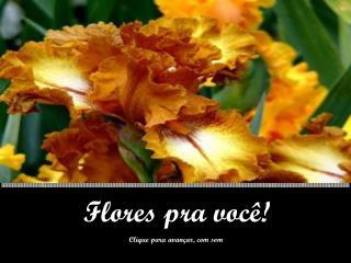 Flores pra  você!