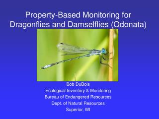 Property-Based Monitoring for Dragonflies and Damselflies (Odonata)