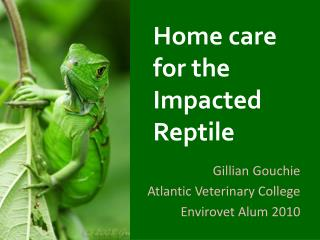 Home care for the Impacted Reptile