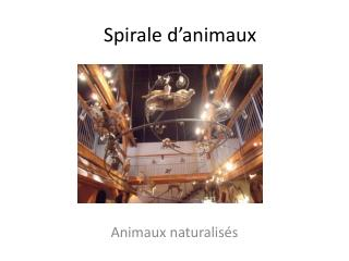 Spirale d'animaux