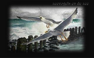 zeevogels en de zee