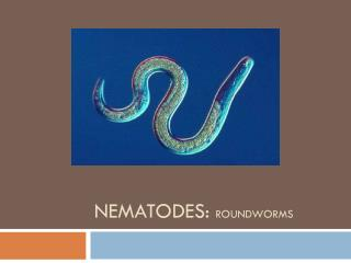 NEMATODES:  ROUNDWORMS
