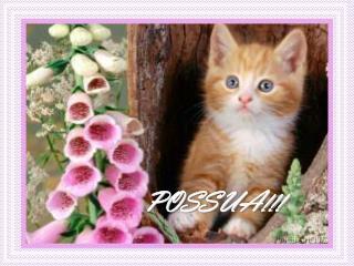 POSSUA!!!