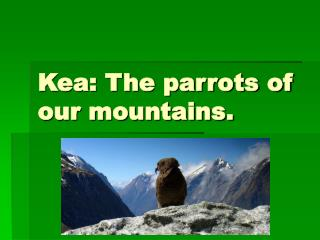 Kea: The parrots of our mountains.