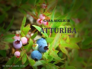 GARA AUGLIS IR