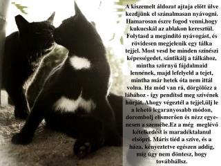 Minél több emberrel találkozom,  annál jobban szeretem a macskámat.