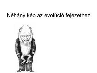Néhány kép az evolúció fejezethez