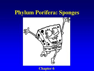 Phylum Porifera: Sponges