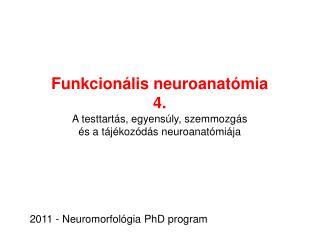 Funkcionális neuroanatómia 4 .