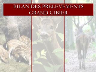 BILAN DES PRELEVEMENTS  GRAND GIBIER