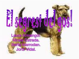 El segrest del gos!
