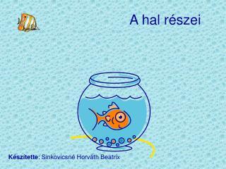A hal részei