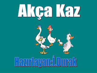 Akça Kaz
