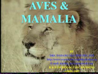 AVES & MAMALIA