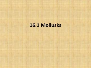 16.1 Mollusks