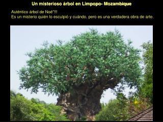 Un misterioso árbol en Limpopo- Mozambique