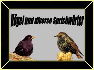 Vögel und diverse Sprichwörter