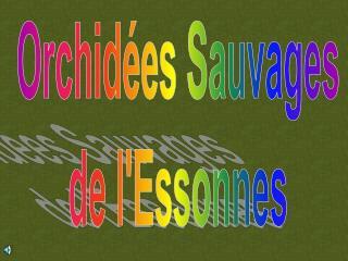Orchidées Sauvages de l'Essonnes