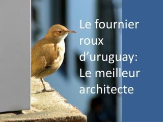 Le fournier roux d'uruguay: Le meilleur architecte