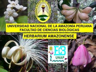 HERBARIUM AMAZONENSE