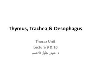 Thymus, Trachea & Oesophagus