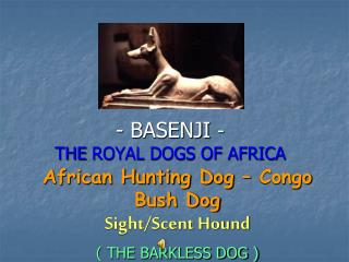 BASENJI  - THE ROYAL DOGS OF AFRICA