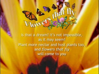 Plant more nectar and host plants too, and  flowers that fly will come to you