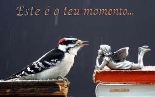 Este é o teu  momento...
