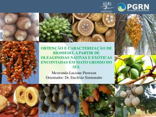 Mestranda:Luciane Pierezan Orientador: Dr. Euclésio Simionatto