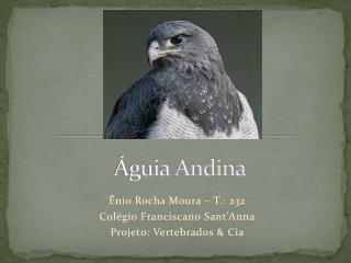 Águia Andina