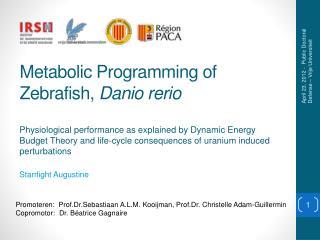 Metabolic Programming  of Zebrafish,  Danio rerio