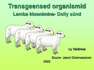 Transgeensed organismid Lamba kloonimine- Dolly sünd