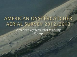 American Oystercatcher aerial survey 2012/2013