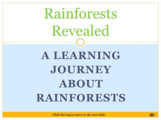 Rainforests Revealed