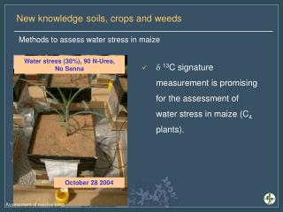 Methods  to assess water stress in ma ize