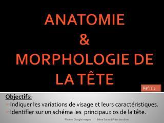 ANATOMIE  &  MORPHOLOGIE DE LA TÊTE