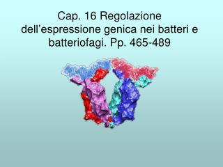 Cap. 16 Regolazione dell'espressione genica nei batteri e batteriofagi. Pp. 465-489
