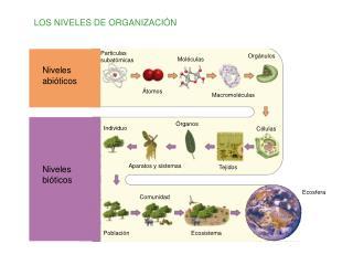 LOS NIVELES DE ORGANIZACI�N