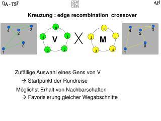 Zuf�llige Auswahl eines Gens von V