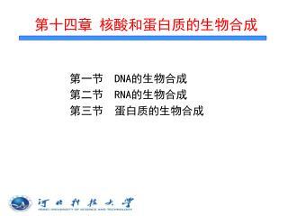 第十四章 核酸和蛋白质的生物合成