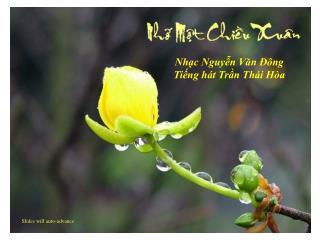 Nhạc Nguyễn Văn Đông Tiếng hát Trần Thái Hòa