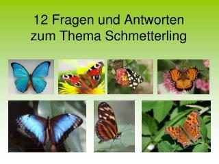 12 Fragen und Antworten  zum Thema Schmetterling